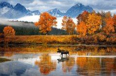 moose-in-snake-river